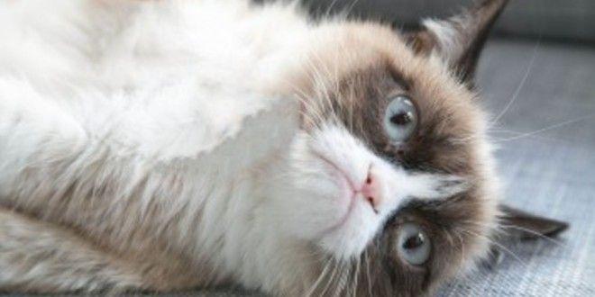 Un peu de mauvaise humeur peut apporter beaucoup de bonne humeur. Sur DailySmile nous optons généralement pour le sourire mais avec Grumpy Cat., nous nous avouons vaincu…  La folie #GrumpyCat : http://dailysmile.fr/2013/08/06/423-la-folie-grumpy-cat
