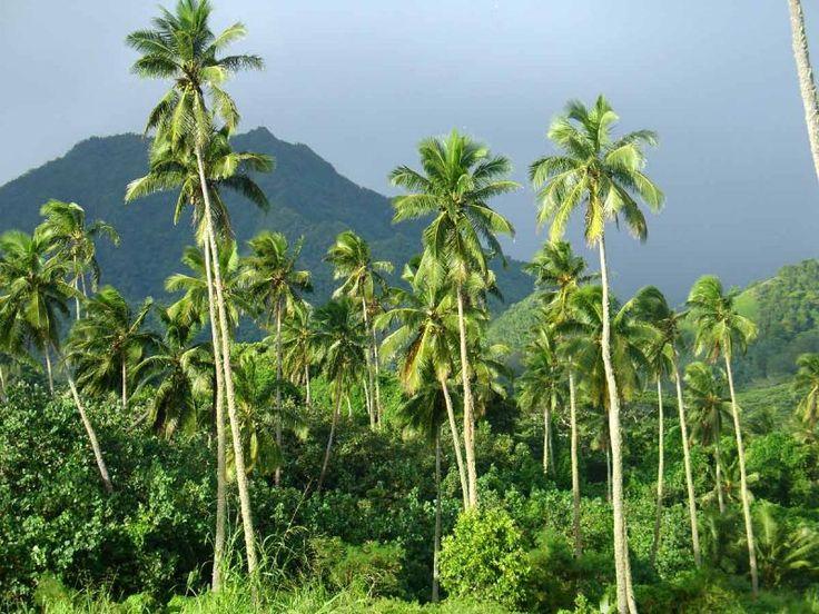 Rarotonga Island- South Cook Islands