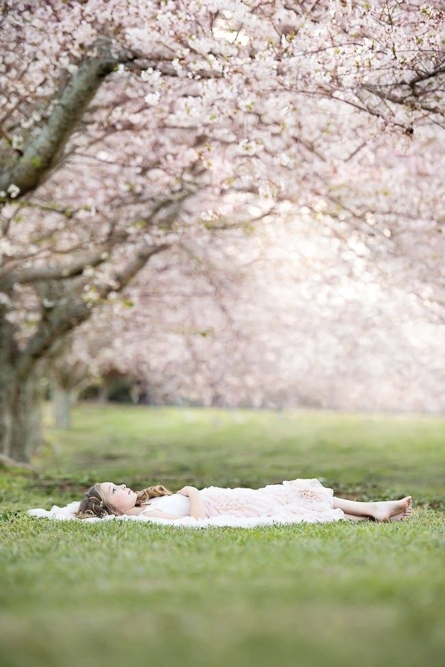 Pin By Petit Fleur On Adaline Le Printemps Eternel In 2020 Spring Family Pictures Springtime Photography Cherry Blossom Pictures