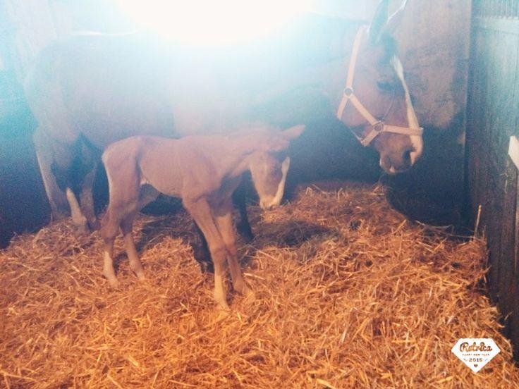 Little newborn ❤
