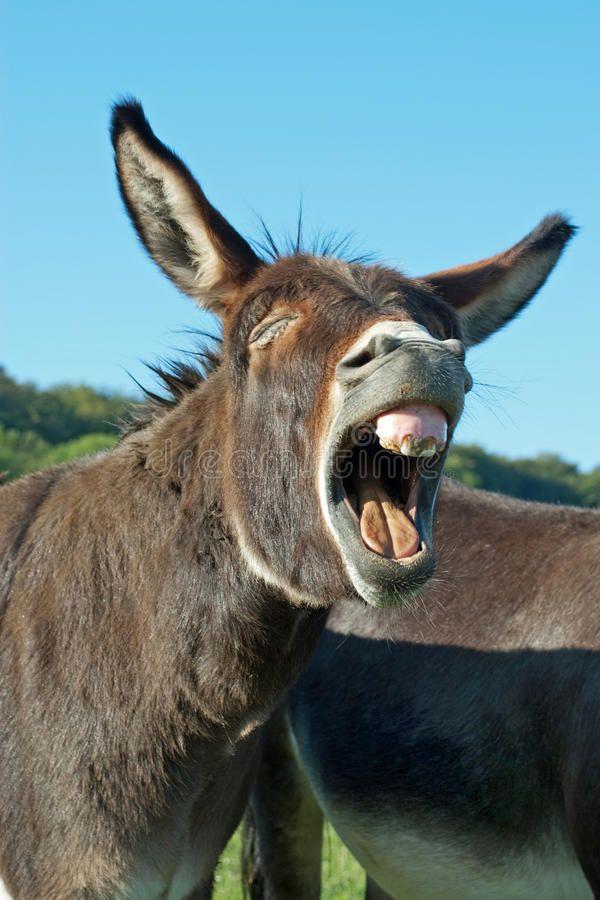 25+ Funny donkey ideas in 2021