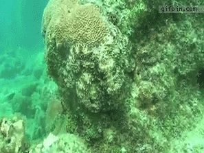 Amazing GIFs of Octopus Camouflage