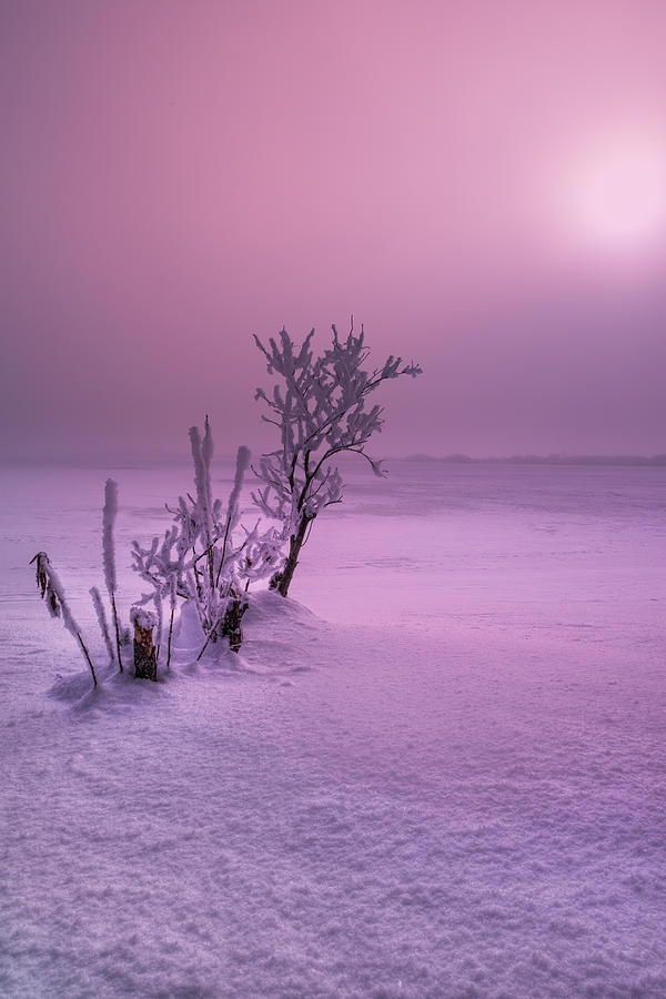 ✯ Stark Winter