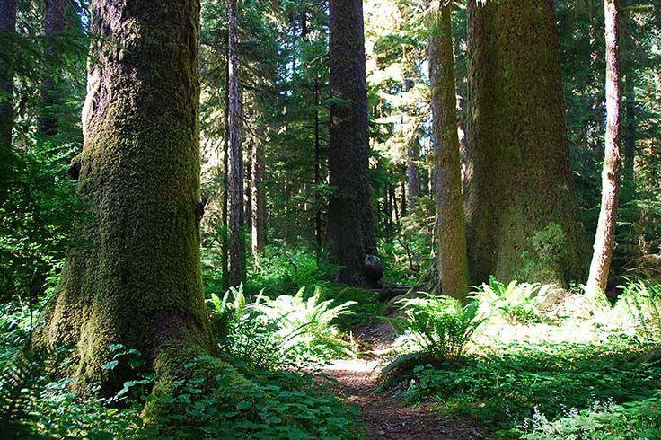 Randy Stoltman Grove in Carmanah Walbran Park, Vancouver Island, British Columbia, Canada
