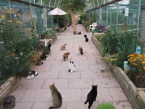 Outdoor Shelters For Animals : Best outdoor cat shelter ideas that you will like on