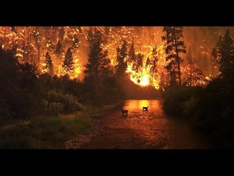 WOW! Look what they just found in Tennessee Wildfires!  Although there is no way to prove the news is reporting the whole truth about this, the photos speak for themselves.