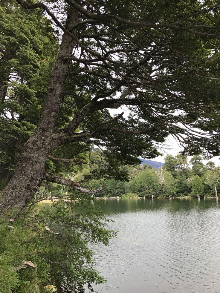Laguna Captren, parque Conguillio