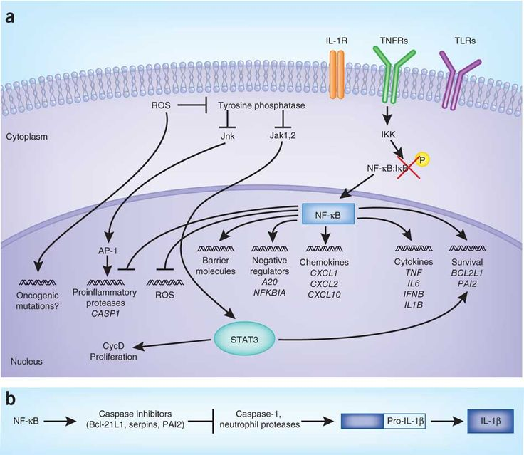 Pro- and anti-inflammatory functions of NF-[kappa]B and their relationship to tumorigenesis.
