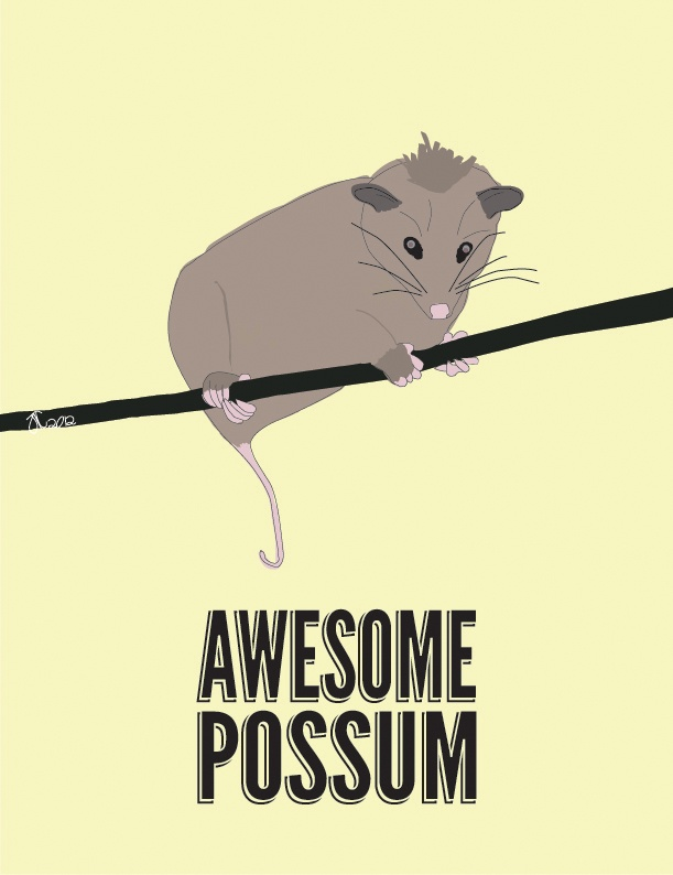 Top 8 Awesome Collections Of Floor Tiles Designs In India: 66 Best Images About Awesome Possum On Pinterest