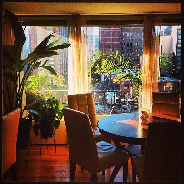 Morning mood in my house on a great Chicago fall day #sun #chicago #palm #chair #diningtable #westelm #tree #house #wood #morning #sheers #sunrays