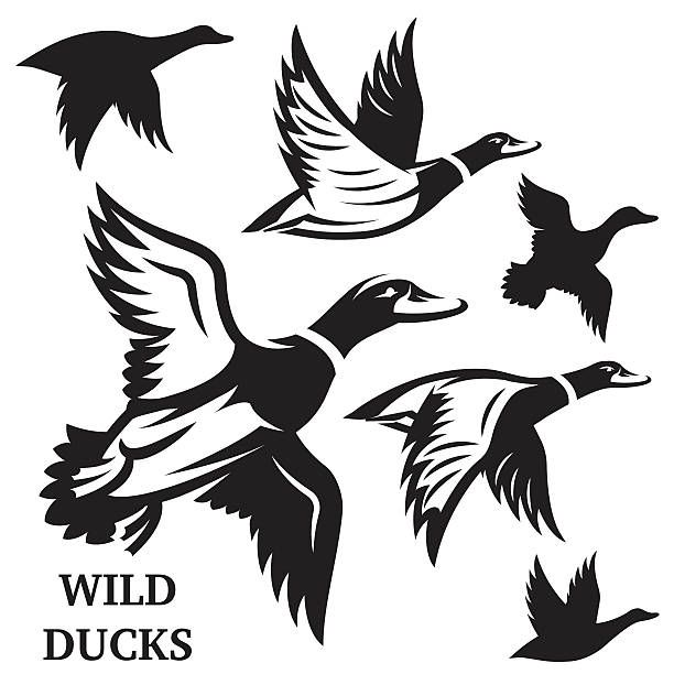 46++ Duck clipart black and white vector info