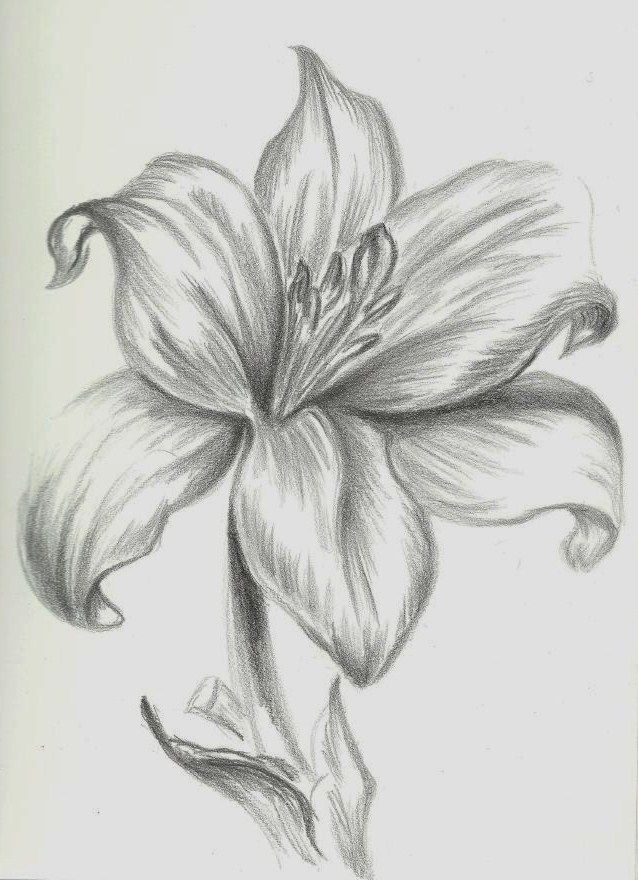Easy Drawings Of Flowers In Pencil Google Image Re...