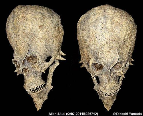 This is one of the mysterious fossilized humanoid skull found in Africa in 2011. Although the external size and the brain cavity size of this skull are similar to those of the modern human, it is actually 18 million years old.