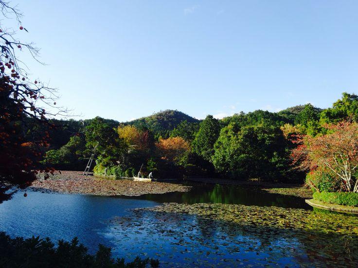 龍安寺 - Ryoanji Temple