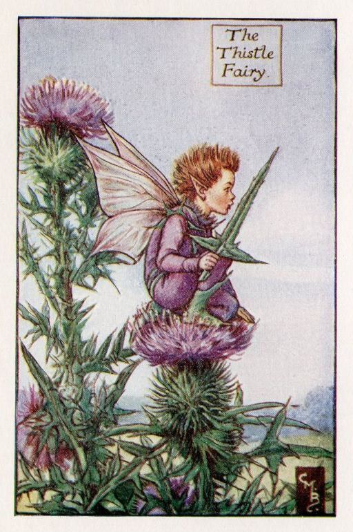 Thistle Flower Fairy Vintage Print c1927 Cicely by TheOldMapShop