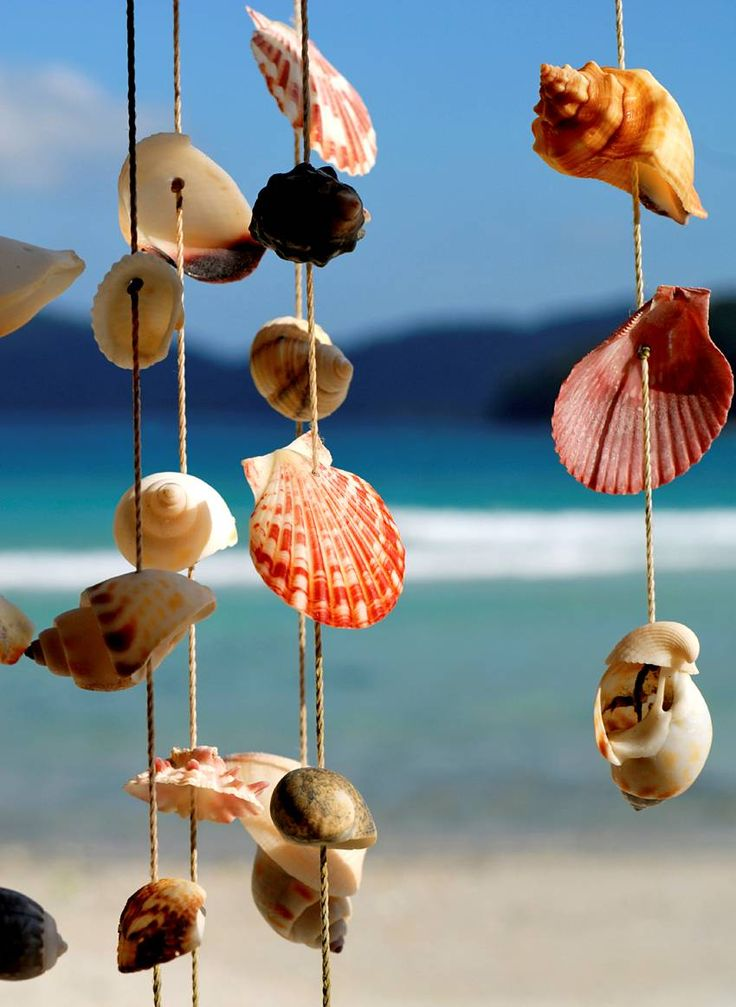 shells shells shellsIdeas, Beach House, Sea Shells, At The Beach, Windchimes, Summer, Wind Chimes, Seashells, The Sea