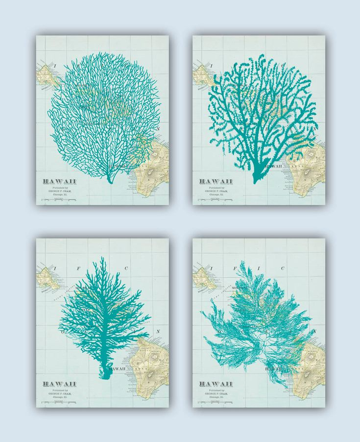 Sea Fan Art, Coral, Sea Fans, Seaweed Collage, Hawaii Map, Nautical · Beach BathroomsBathrooms  DecorNautical ...