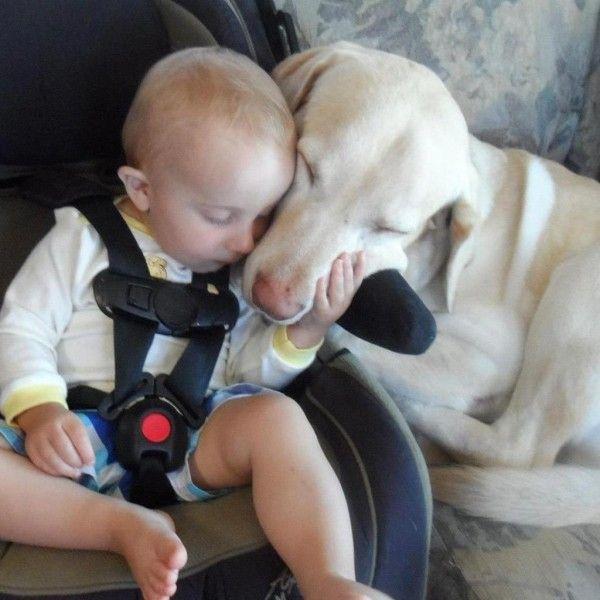 bebe calin chien siege auto