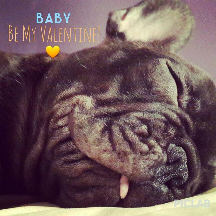 valentine puppy pictures