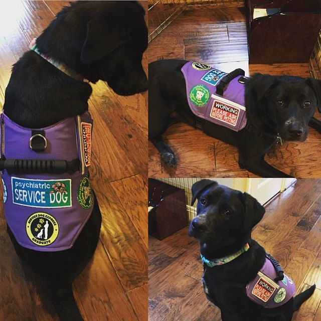 C C Added A Photo Of Their Purchase With Images Service Dog