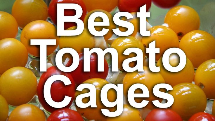 The DIY Tomato Cage Gest Even Better