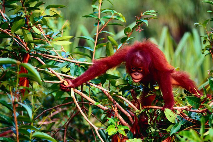 Drifting down the Sekonyer: inside Tanjung Puting National Park - Lonely Planet