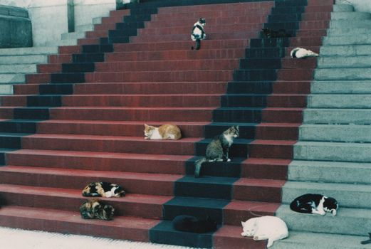 CoolKitty Cat, Post, Carpets Cat, Art, Red Carpets, Guido Ramas, Stairways To Heavens, Kitteh Stairs, Animal