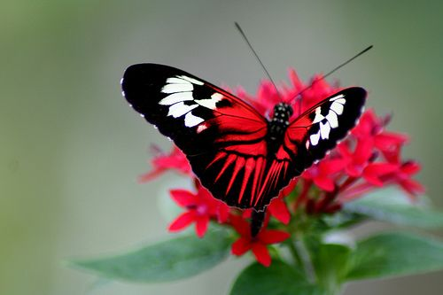 Elegance, Butterfly World in Coral Springs, Florida by Dawn Ashley