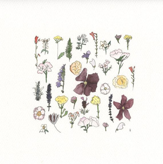 Meadow Flowers Watercolour Illustration by emilieOillustration
