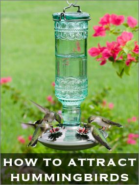How To Feed & Attract Hummingbirds  ...