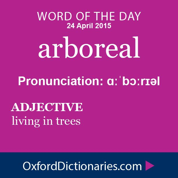 arboreal (adjective): Living in trees. Word of the Day for 24 April 2015. #WOTD #WordoftheDay #arboreal