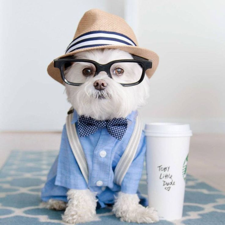 Toby, el perro más hipster de Instagram