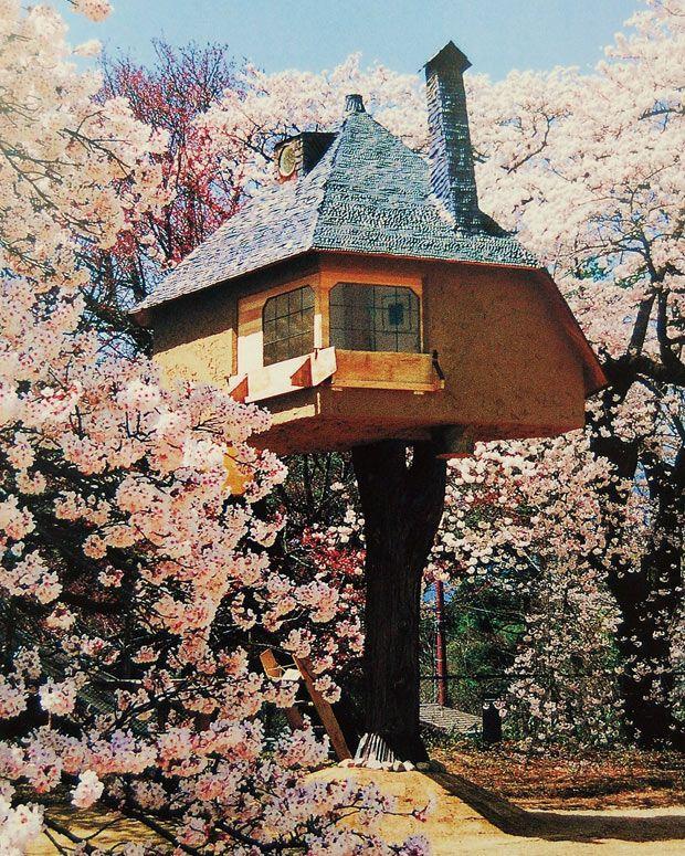 サブカルな背景ありのツリーハウス! 同敷地内には歴史的な名建築も!あの細川護煕元首相の別荘の茶室を設計したことでも有名な建築史家、藤森照信先生が手がけたツリーハウス、それが「茶室 徹」。ホストツリーは樹齢80年の檜の木で、高さは地上約4m、室内は1.7坪。茶室の命名は作家の阿川弘之氏によるものだそ…