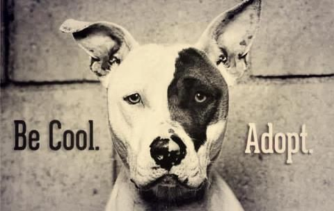 #dogquotes #doglover #bluenosepit #pitbullsofinstagram #pitbullsofficial http://pitbullsociety.org/likeusonfacebook