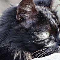 chat en aveyron