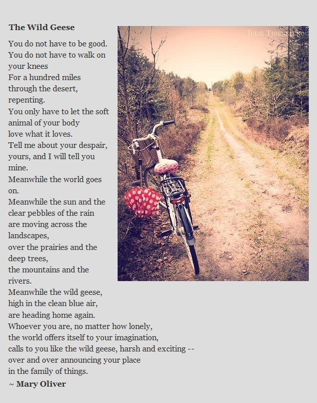 Mary Oliver - The Wild Geese