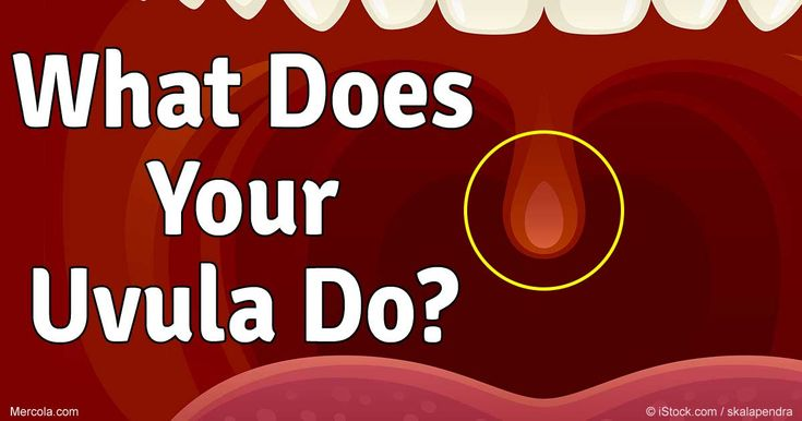 Uvula, the dangly thing hanging in the back of your throat, serves several…