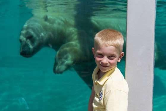 Situé à l'entrée de la ville de Québec, l'Aquarium du Québec permet aux petits et grands de découvri... - Photo Steve Deschênes, Aquarium du Québec, Sépaq