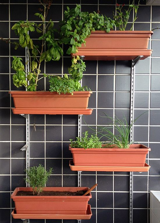 como fazer uma horta no apartamento 1