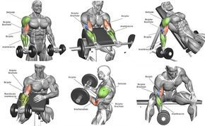 The Best Bicep Workout Program to Ensure the Biggest Biceps http://www.weightlossjumpstar.com/types-of-exercise-to-lose-weight/