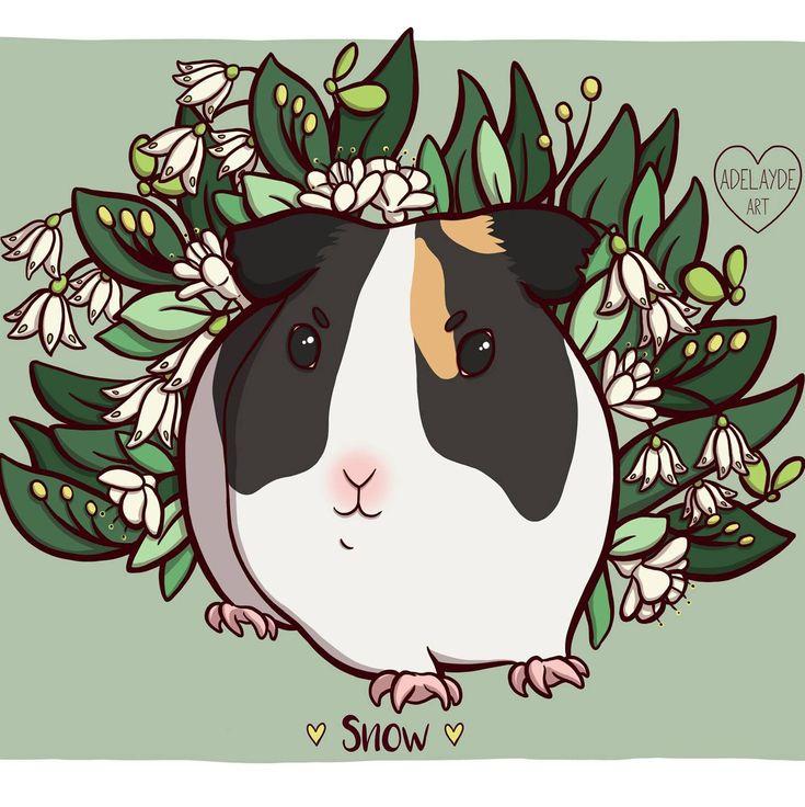 New guinea pig pet portrait