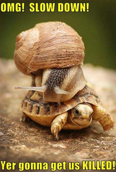 Oh my gosh, slow down! ...........click here to find out more http://googydog.com