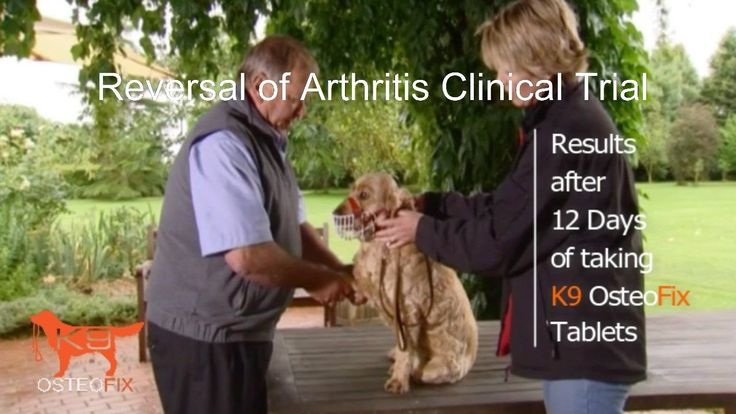 Cocker Spaniel with Severe Arthritis Treated Naturally *MUST SEE THESE INSANE RESULTS* - WATCH VIDEO HERE -> http://arthritisremedy.info/cocker-spaniel-with-severe-arthritis-treated-naturally-must-see-these-insane-results/     *** is there a cure for arthritis ***  For more information about this Miracle product for dogs that are suffering from Joint Pain go to either:  Cocker Spaniel with Severe Arthritis Treated Naturally *MUST SEE THESE INSANE RESULTS* during a 12 Day Cli