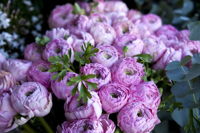 Peony flower meaning...so pretty!