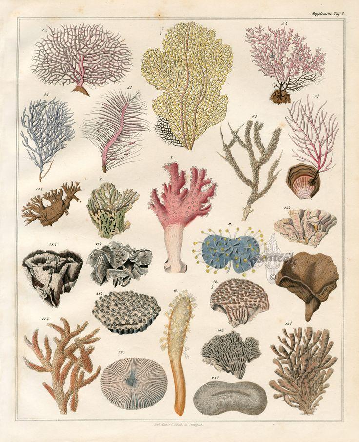Coral Prints 1833-1841