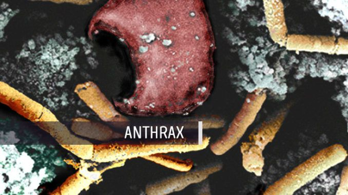 Pfenex Anthrax Vaccine Shows Good Early Results  Global Biodefense