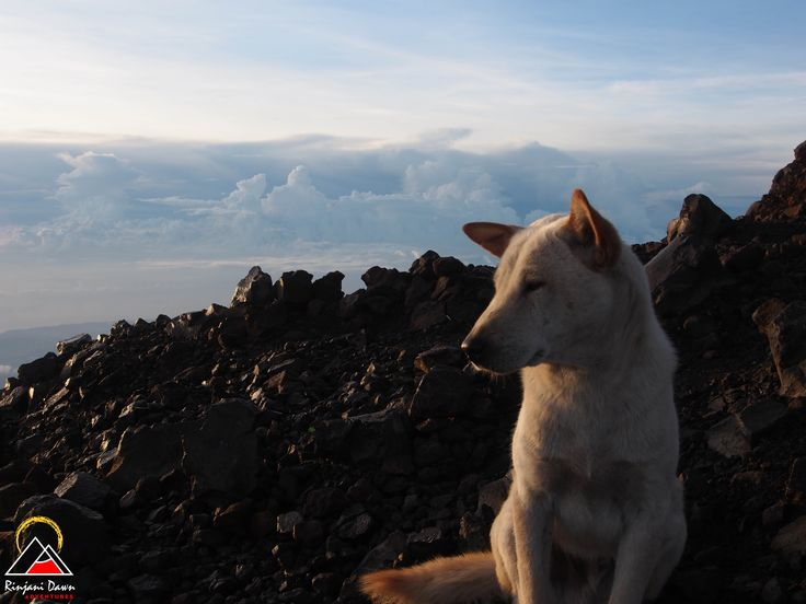 Putih, on the summit of Mt Rinjani. www.rinjanidawnadventures.com