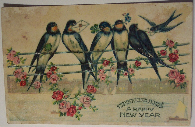 swallows happy new year