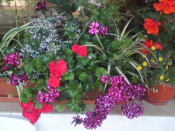 Kwiaty Na Sloneczny Balkon Plants Parapet