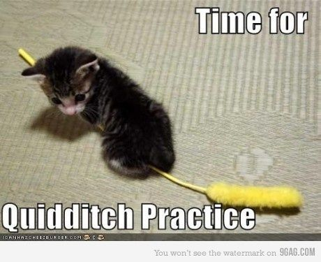 : Cats, Animals, Kitten, So Cute, Harrypotter, Funny, Harry Potter, Kitty, Quidditch Practice